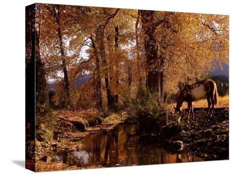 Fall Colors-Robert Dawson-Stretched Canvas Print