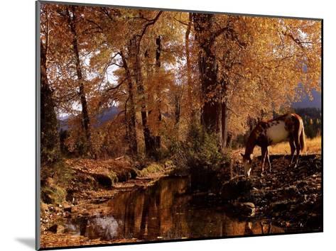 Fall Colors-Robert Dawson-Mounted Art Print