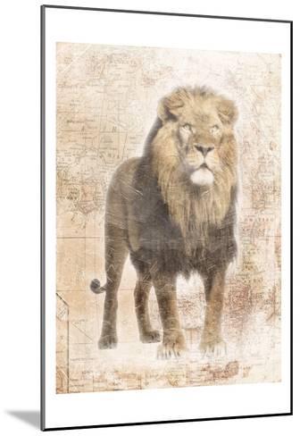 African Lion-Jace Grey-Mounted Art Print