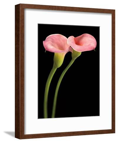 Pink Calla Lilies-Barry Seidman-Framed Art Print