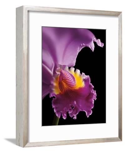 Purple Orchid-Barry Seidman-Framed Art Print