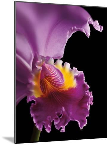 Purple Orchid-Barry Seidman-Mounted Art Print