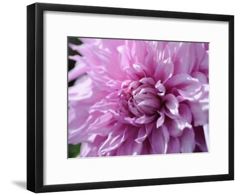 Purple Dahila-Suzanne Foschino-Framed Art Print