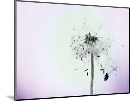 Wishes On A Wind-Tracey Telik-Mounted Art Print