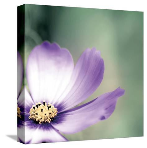 Lonely Lilac 1-Tracey Telik-Stretched Canvas Print