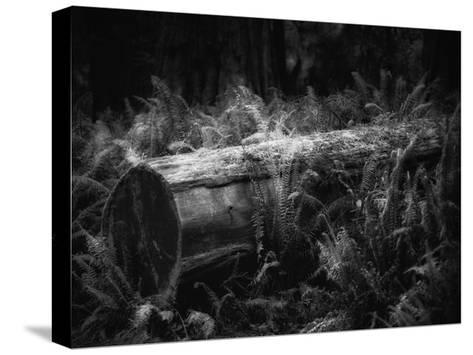 Fallen-Joseph Rowland-Stretched Canvas Print