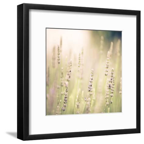 Lavender Fields-Tracey Telik-Framed Art Print