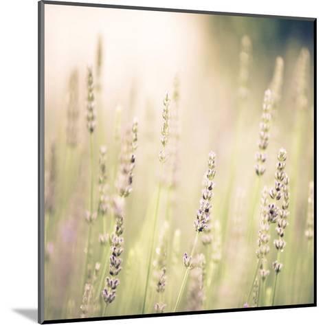 Lavender Fields-Tracey Telik-Mounted Art Print