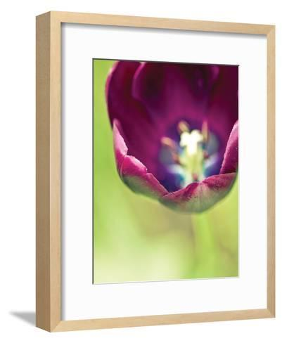 Queen of the Night-Tracey Telik-Framed Art Print