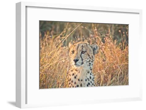 Watching her cubs-Nick Jackson-Framed Art Print