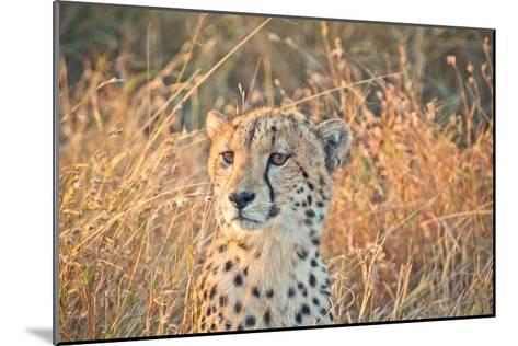 Watching her cubs-Nick Jackson-Mounted Art Print