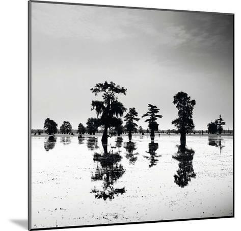 Cypress Swamp V-Josef Hoflehner-Mounted Art Print