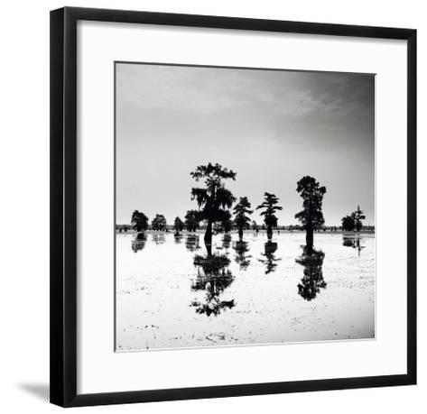 Cypress Swamp V-Josef Hoflehner-Framed Art Print