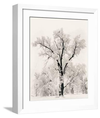 Oak Tree Art Print by Ansel Adams | Art.com