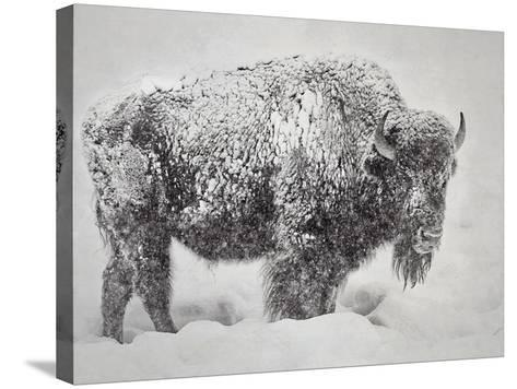 In the Storm-Wink Gaines-Stretched Canvas Print
