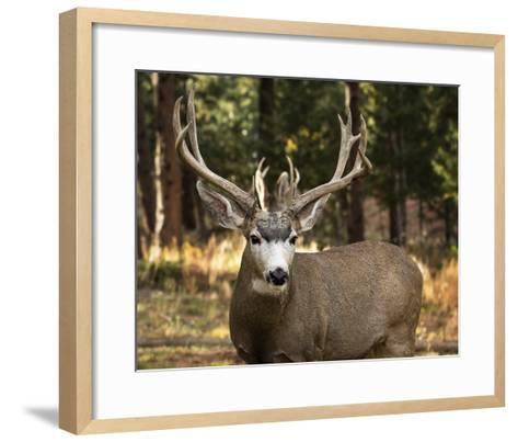 Deer Watch I-Ozana Sturgeon-Framed Art Print