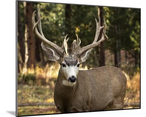 Deer Watch I-Ozana Sturgeon-Mounted Art Print