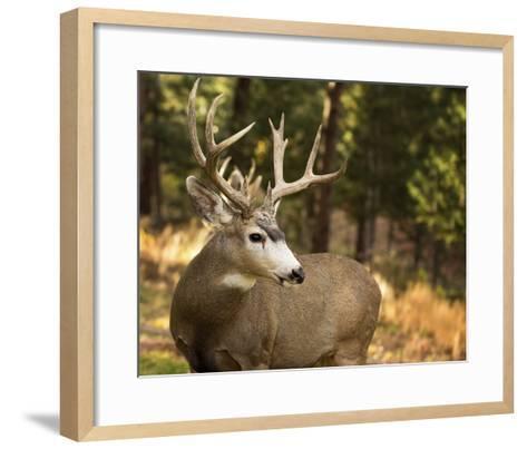 Deer Watch II-Ozana Sturgeon-Framed Art Print