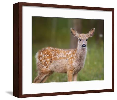 Deer Watch III-Ozana Sturgeon-Framed Art Print