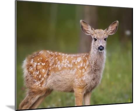 Deer Watch III-Ozana Sturgeon-Mounted Art Print