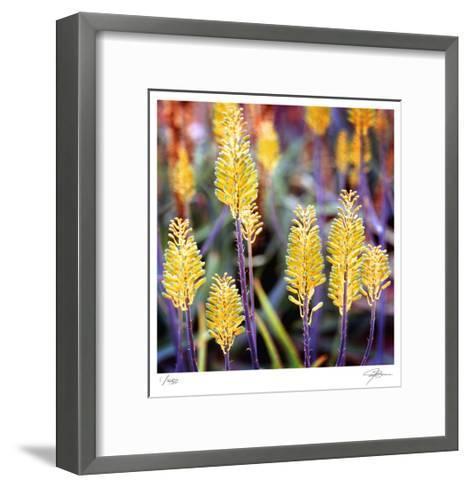 Aloe Buds-Ken Bremer-Framed Art Print