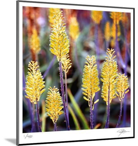Aloe Buds-Ken Bremer-Mounted Limited Edition
