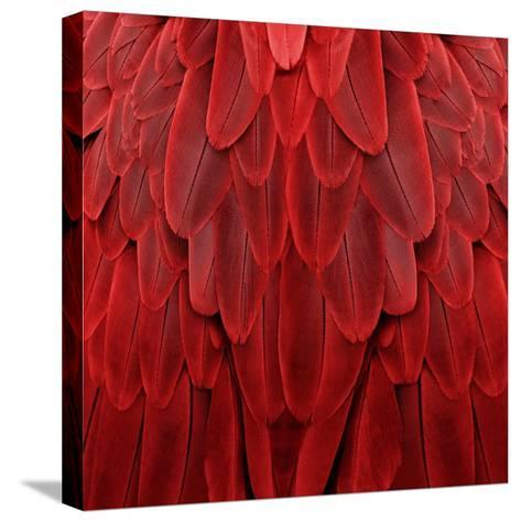 Feathered Friend - Red-Julia Bosco-Stretched Canvas Print