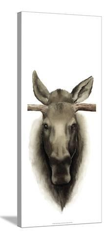 Triptych Moose II-Grace Popp-Stretched Canvas Print