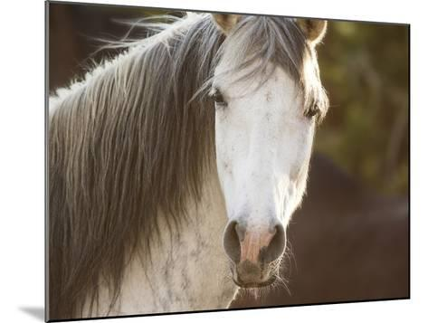 Horse in the Field IV-Ozana Sturgeon-Mounted Art Print