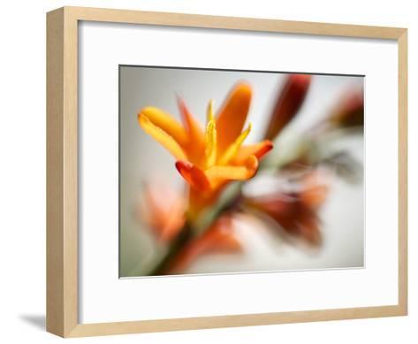 Open Sunshine I-Jonathan Nourock-Framed Art Print