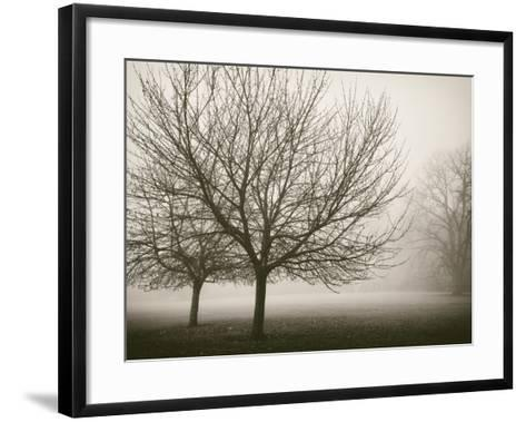Trees in Fog VIII-Jody Stuart-Framed Art Print