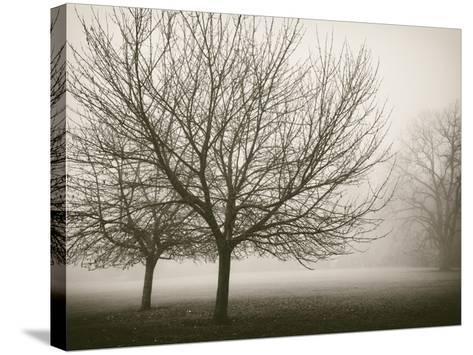 Trees in Fog VIII-Jody Stuart-Stretched Canvas Print