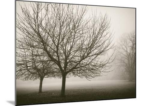 Trees in Fog VIII-Jody Stuart-Mounted Art Print