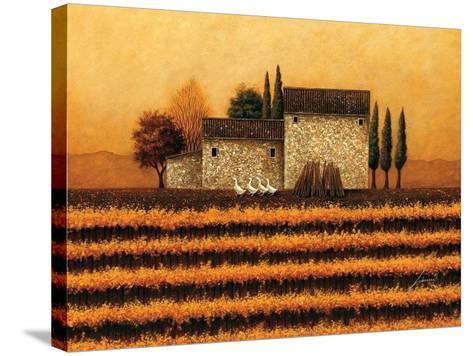 Fall Vineyard-Lowell Herrero-Stretched Canvas Print