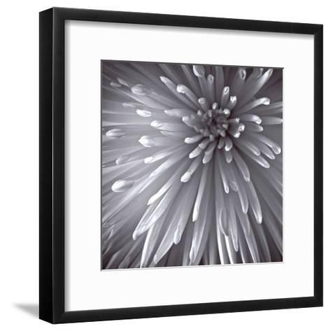 Natural Designs II-Assaf Frank-Framed Art Print