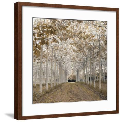 White Gold-Assaf Frank-Framed Art Print