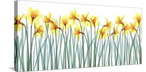 Floral Delight I-Jim Wehtje-Stretched Canvas Print