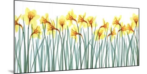 Floral Delight I-Jim Wehtje-Mounted Art Print