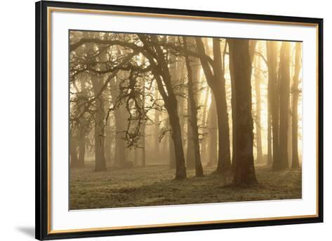 Woodland Sweep-Dennis Frates-Framed Art Print