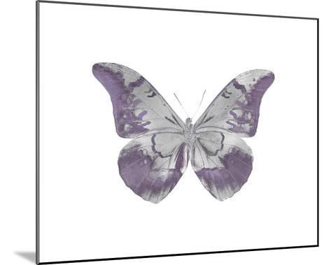 Butterfly in Amethyst I-Julia Bosco-Mounted Giclee Print