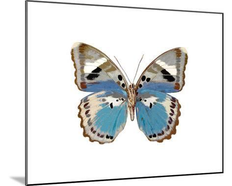 Butterfly in Pink I-Julia Bosco-Mounted Giclee Print