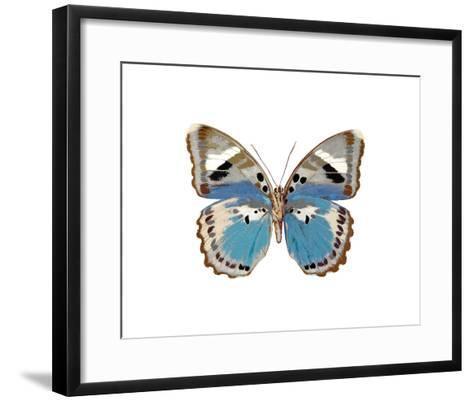 Butterfly in Pink I-Julia Bosco-Framed Art Print