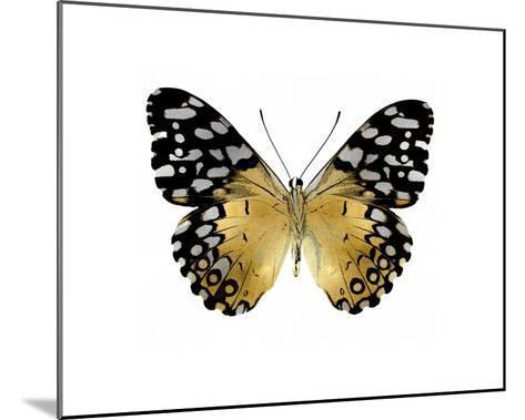 Golden Butterfly IV-Julia Bosco-Mounted Giclee Print