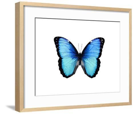 Vibrant Butterfly II-Julia Bosco-Framed Art Print