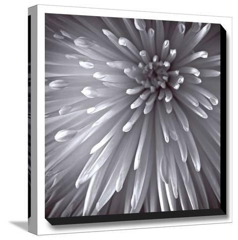 Natural Designs II-Assaf Frank-Stretched Canvas Print
