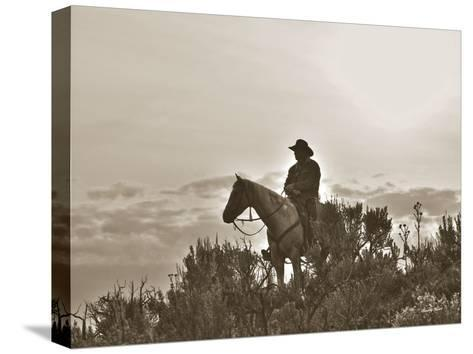 Night Watch-Barry Hart-Stretched Canvas Print