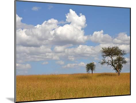Kenya Tree-Golie Miamee-Mounted Art Print
