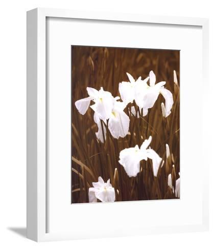 Spring Blossoms I-Boyce Watt-Framed Art Print