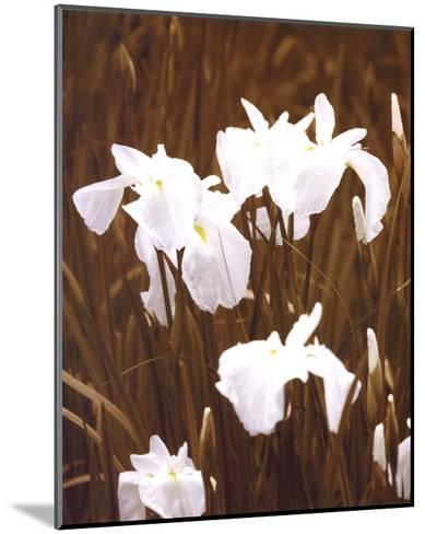 Spring Blossoms I-Boyce Watt-Mounted Art Print