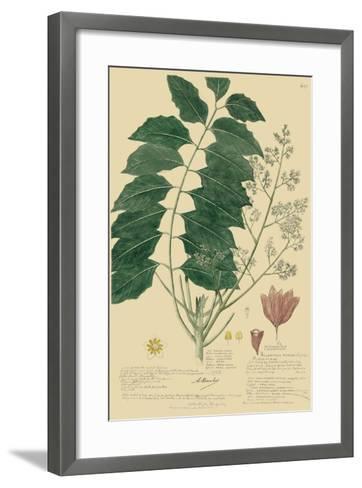 Descubes Tropical Botanical III-A^ Descubes-Framed Art Print